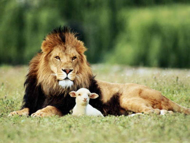 lion-and-the-lamb